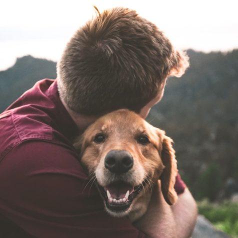 ue faire lorsque le budget est serré et les frais vétérinaires exorbitants? Souscrire une assurance animaux domestiques peut être la solution!